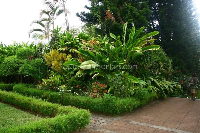 Jardin botanique des mascarins Entretien jardin ile de la reunion