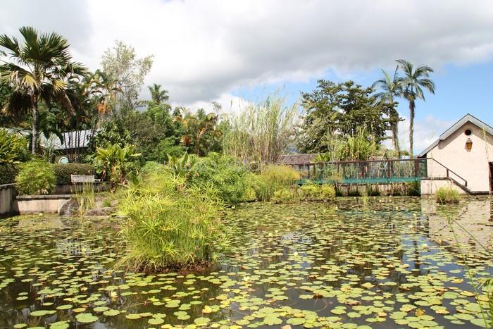 Jardin botanique des mascarins for Jardin botanique 2016