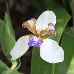 Fleurs jardin des lataniers ile r union for Entretien jardin ile de la reunion