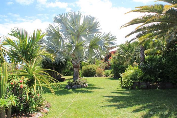 Jardin tropical les lataniers r union for Jardin 974