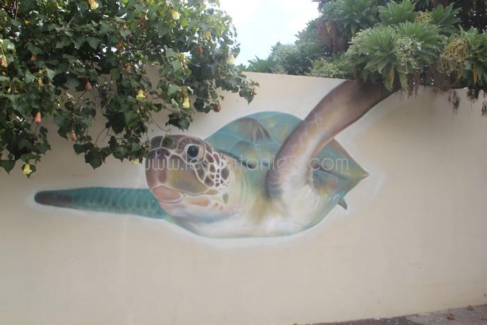 kelonia-tortue-saint-leu-013