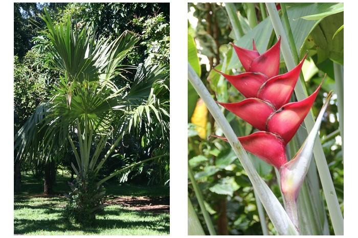 Jardin des Mascarins La Réunion -_001
