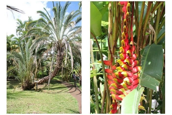 Jardin des Mascarins La Réunion -_002