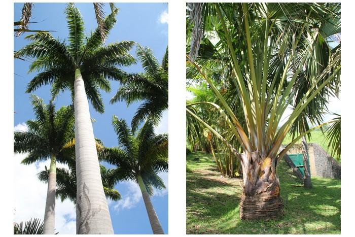 Jardin des Mascarins La Réunion -_003