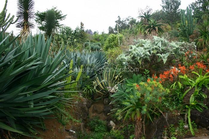 jardin-botanique-mascarins-ile-reunion-020