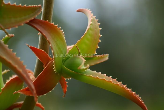 jardin-botanique-mascarins-ile-reunion-022