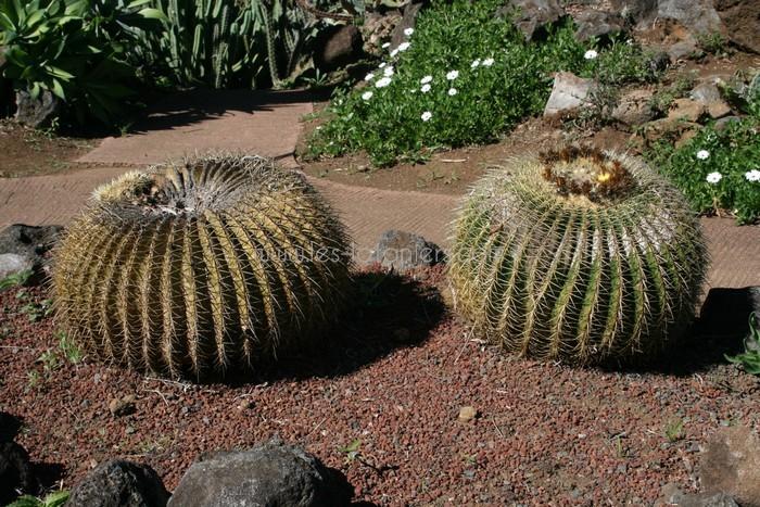 jardin-botanique-mascarins-ile-reunion-024