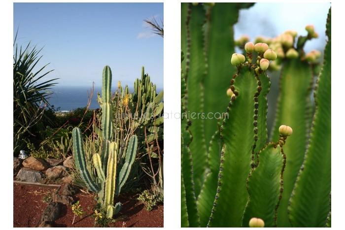 jardin-botanique-mascarins-ile-reunion-026