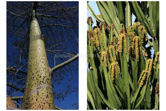 jardin-botanique-mascarins-ile-reunion-028