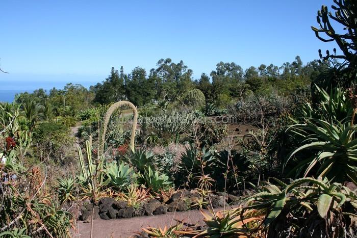 jardin-botanique-mascarins-ile-reunion-029