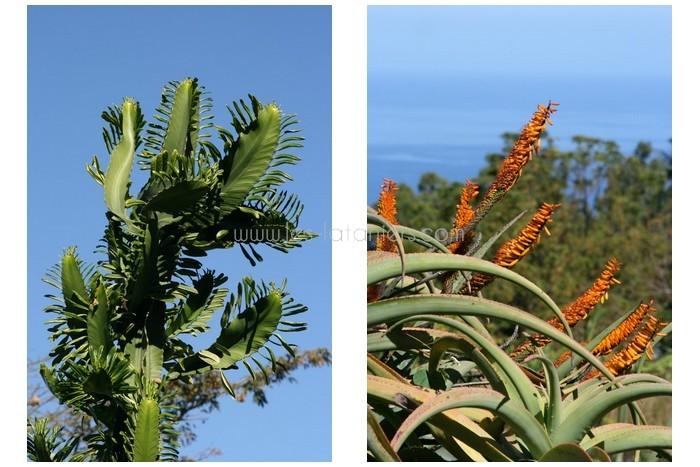 jardin-botanique-mascarins-ile-reunion-030