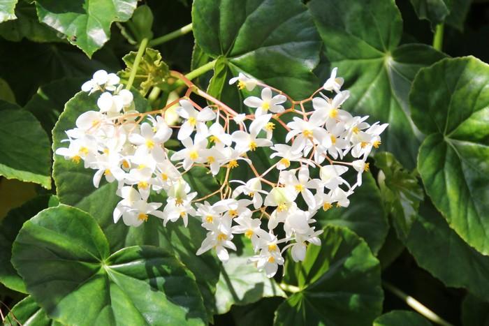 jardin-botanique-mascarins-ile-reunion-035