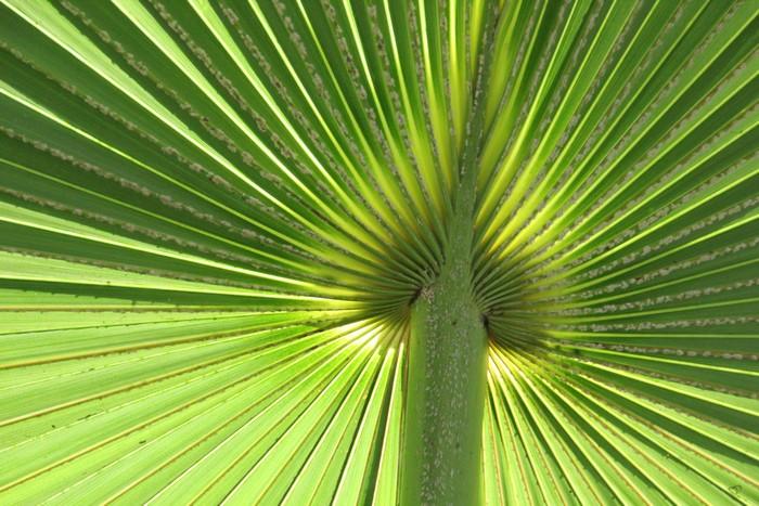 jardin-botanique-mascarins-ile-reunion-044