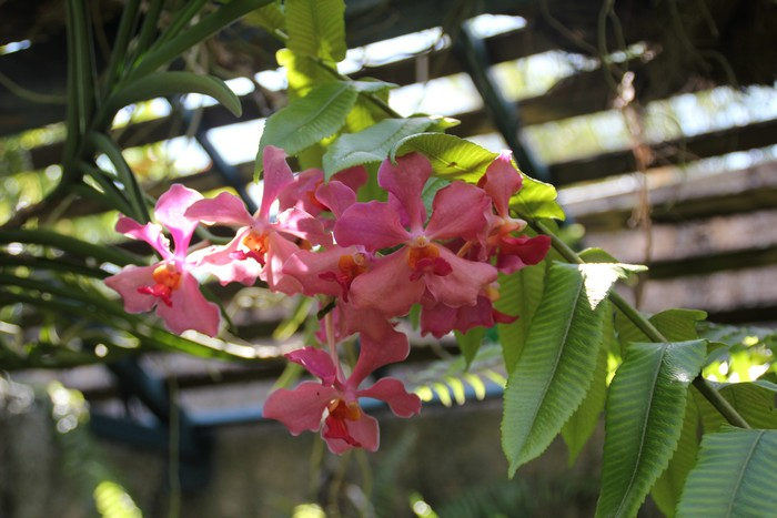 jardin-botanique-mascarins-ile-reunion-046