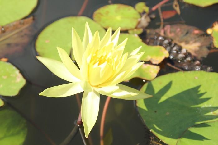 jardin-botanique-mascarins-ile-reunion-047