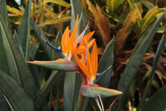 jardin-botanique-mascarins-ile-reunion-048