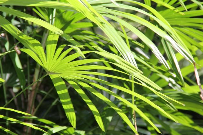 jardin-botanique-mascarins-ile-reunion-049