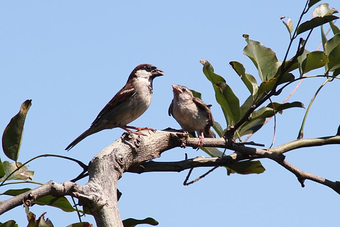 oiseaux-ile-reunion-022