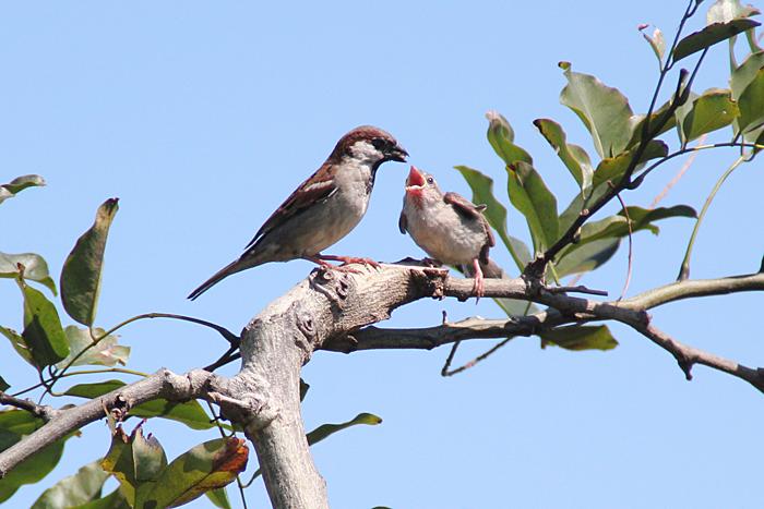oiseaux-ile-reunion-023