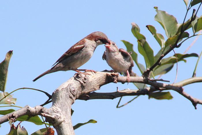 oiseaux-ile-reunion-024