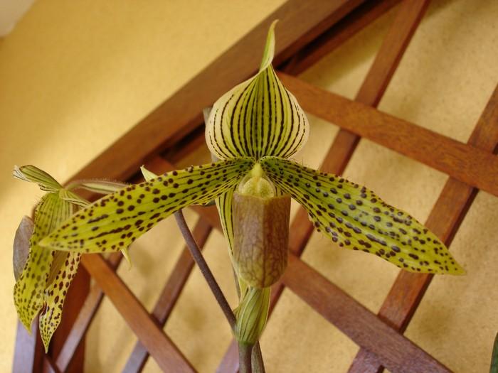 Orchidée ile Réunion