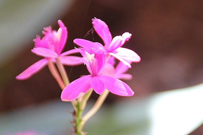 orchidee-ile-reunion-023