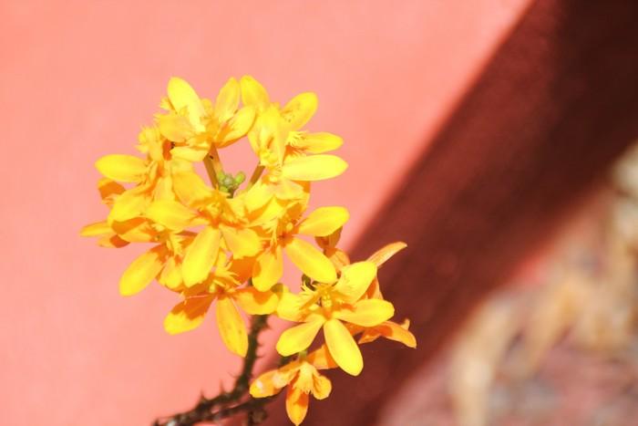 orchidee-ile-reunion-024
