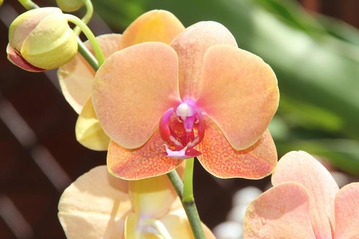 orchidee-ile-reunion-026