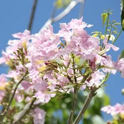 Botanique Les Lataniers Saint Leu Ile Reunion