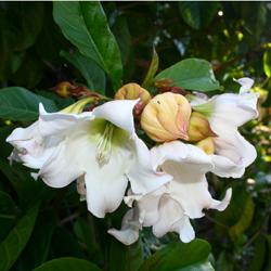 Fleurs De La Reunion