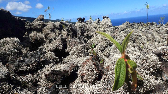 Rando volcan Réunion 6