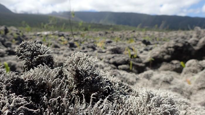 Rando volcan Réunion 5