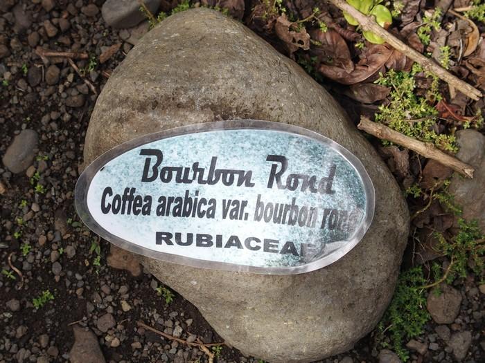Domaine du Café grillé ile Réunion
