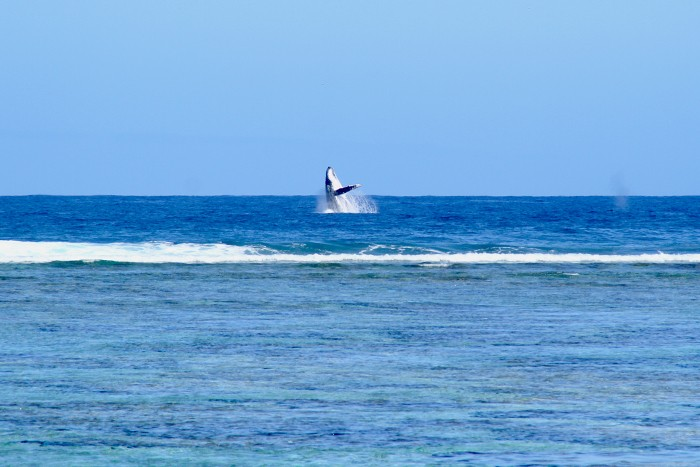 baleines-ile-reunion-001